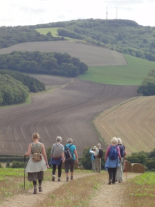 Descending Littlton Down before climbing up again to Bignor Hill - click to enlarge